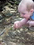 baby-persianv_(1)_w.jpg