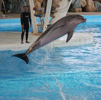 عکسهای دیدنی از دلفین های جزیره کیش
