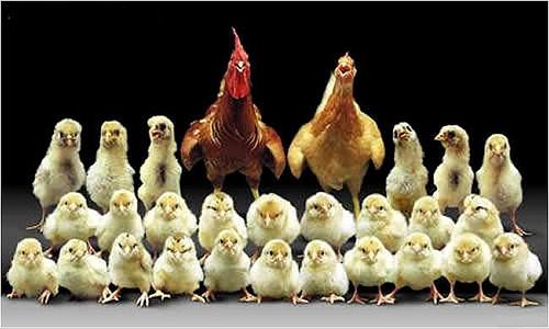 پول دار ترین خانواده ایرانی !!! + تصویر