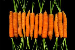 براق کردن هویج به روش کلاسیک