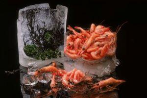 سه راه جلوگیری ازفسادموادغذایی