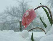 آمادگي هاي زمستاني