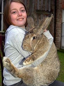 عکس : بزرگترین خرگوش جهان