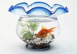 نگهداری ماهی قرمز عید نوروز