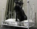 هتل مجلل چهار ستاره برای سگها در پاریس
