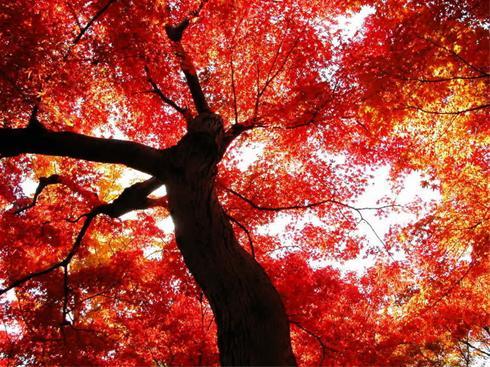 عکس:زیبایی های آفرینش خالق را بیبنید