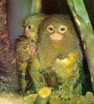 عکس هایی زیبا از 7 حیوان عجیب دنیا