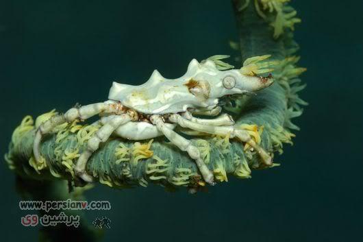 عکسهای شگفت انگیز و عجیب از زیر دریا