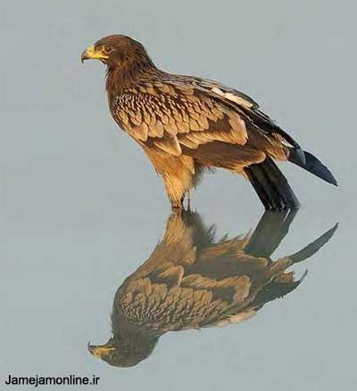 زيباترين عكس هاي پرندگان 2009 ( تصویری )