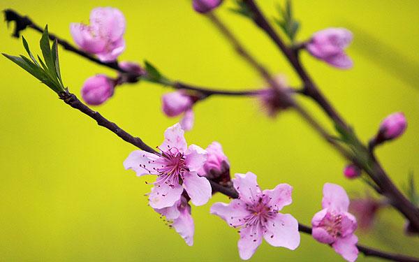 عکسهای دیدنی و زیبا از بهار ...