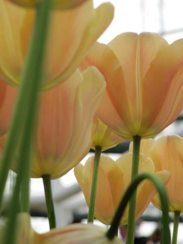عکسهای دیدنی یک باغ گل زیبا در هلند