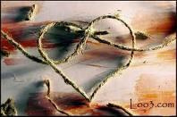 تست روانشناسی عشق / یک تست ساده و جذاب