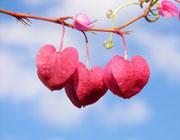 سال جدید با قلب های بهاری