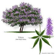 گیاه جادویی دختران و زنان جوان