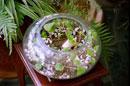 عکس : باغی درون شیشه