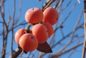 میوه ای علیه چربی و فشار خون