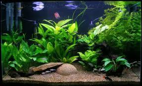 نفخ را با گیاه درمان کنید