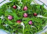 فواید سبزی هایی که در سبزی خوردن هستند