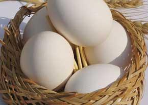 تخم مرغ براي قلب مفيد است