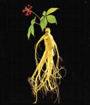 هفت خاصیت گیاه جینسینگ