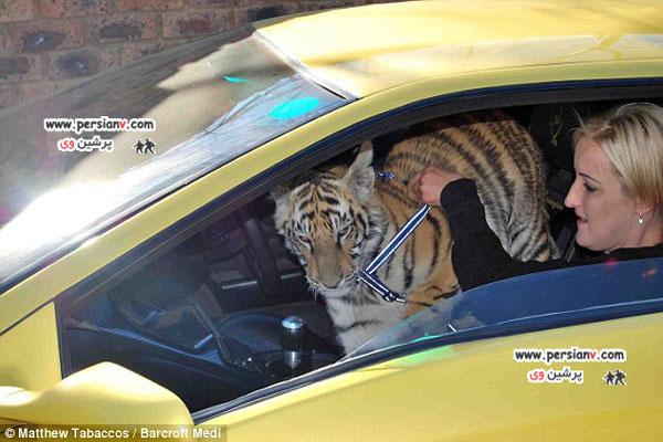 تصاویر زندگی زوجی با حیوان درنده آفریقایی +عکس