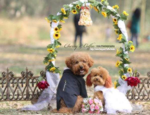 عکس هایی جالب از عروس داماد منتخب سال