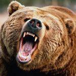 تصاویری از حمله خونین خرس به مرد قزوینی