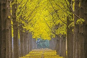 زیباترین و جذاب ترین مکان های پاییزه چین +تصاویر