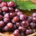 خواص انگور،کشمش،غوره،برگ مو در قرآن را بخوانید