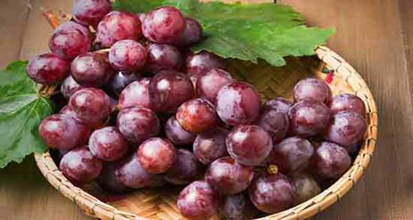 خواص انگور ، کشمش ، غوره ، برگ مو در قرآن را بخوانید