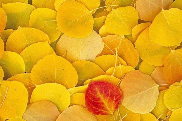 رنگ زرد در قرآن و احادیث ؛ رنگ زرد موجب چه چیزی در انسان میشود؟