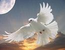 گندمهای دعا خوانده را به مرغان بدهید و حاجت بگیرید+ دعایی بسیار مجرب