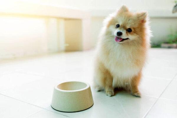 نگهداری سگ در خانه