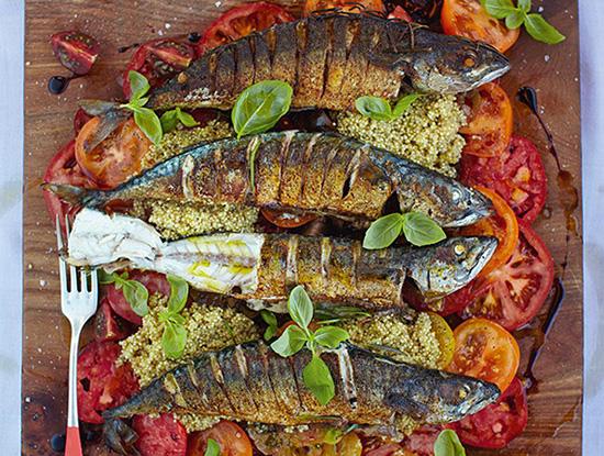 ماهی ماکرل