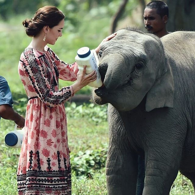 عکس جالب کیت میدلتون در حال شیر دادن به یک بچه فیل در هند