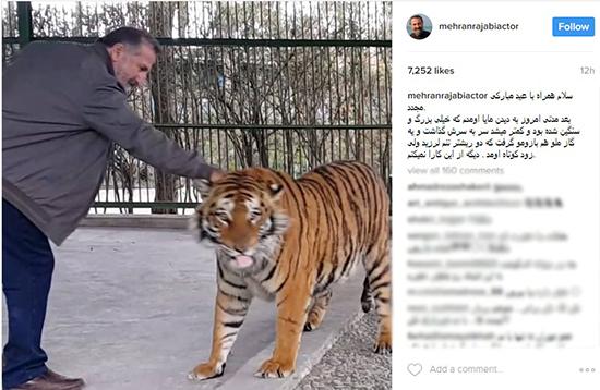 مهران رجبی | یک ببر بازیگر ایرانی را گاز گرفت! +عکس