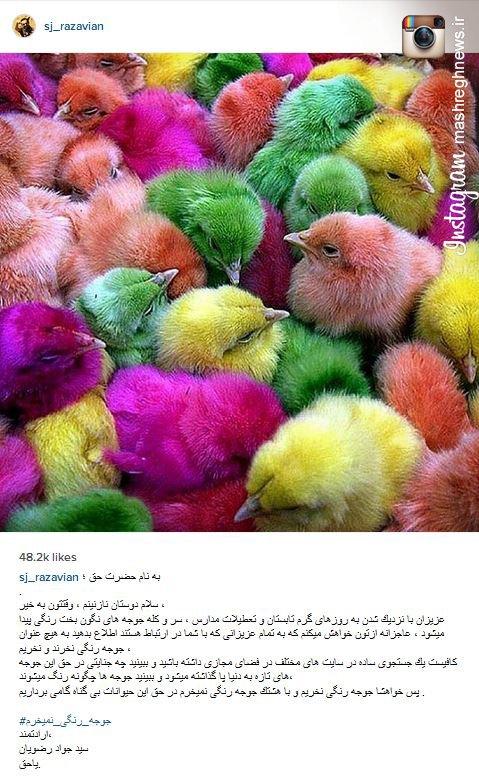 کمپینی که جواد رضویان برای جوجه ها راه انداخته است! +عکس