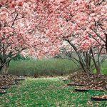 آمد بهار خرم با رنگ و بوی طیب شعری زیبا از رودکی
