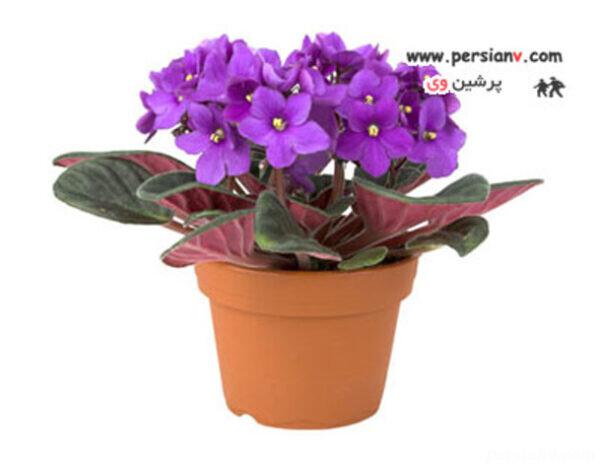 استفاده از گلدان گل