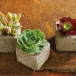 ایده های جالب برای گلدان انواع گل و گیاهان طبیعی داخل خانه