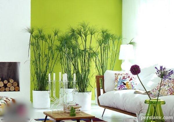 رنگ سبز برای منزل