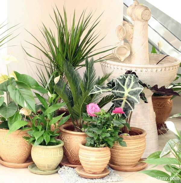 چیدمان گل و گیاه