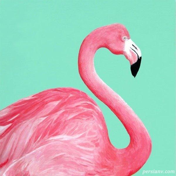 دکوراسیون منزل با تم زیبای پرنده صورتی فلامینگو +عکس