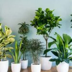 ایده های ناب و بکر برای قرار دادن گل و گیاه در مبلمان ، میز و صندلی خانه