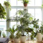 این گیاهان آپارتمانی، خانه تان را زیبا و هوایش را تصفیه می کند