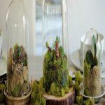 گلدانهای شیشه ای که به تراریوم معروفند خانه شما را تحت تاثیر خود قرار می دهند+تصاویر