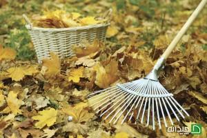 چگونه حیاط خانه خود را برای برگریزان های زیبای پاییزی آماده کنید؟+تصاویر