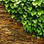 تزیین نمای بیرونی و دیوار خارجی ساختمان با گیاهان چسبیده + تصاویر