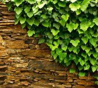 تزیین نمای بیرونی و دیوار خارجی ساختمان با گیاهان چسبیده+تصاویر