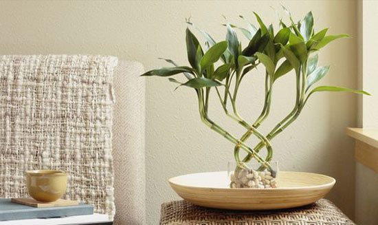 تزیین اتاق با بامبو گلدانی خوش یمن و خوش قدم برای همه فصول +تصاویر